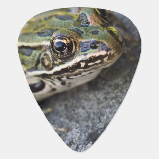Northern Leopard frog, See-through Island, Guitar Pick