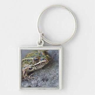 Northern Leopard frog, See-through Island, Key Chain