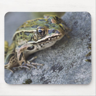 Northern Leopard frog, See-through Island, Mouse Pad