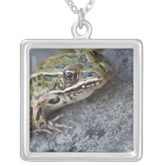 Northern Leopard frog, See-through Island, Necklaces