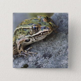 Northern Leopard frog, See-through Island, Pinback Button