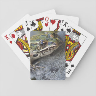 Northern Leopard frog, See-through Island, Playing Cards