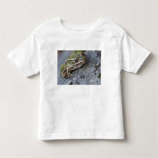 Northern Leopard frog, See-through Island, Toddler T-shirt