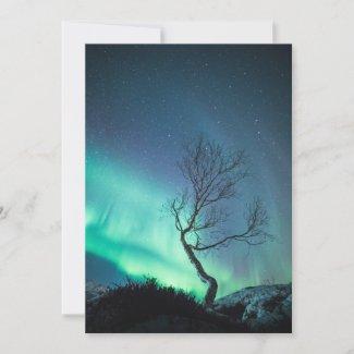 Northern Light Tree Card