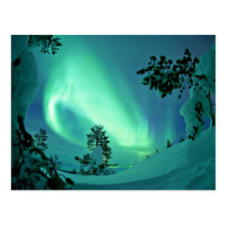 Northern Lights at Winter Postcard