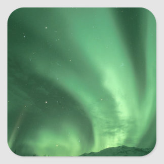 Northern lights, Aurora borealis, over foothills Square Sticker