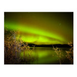 Northern lights (Aurora borealis) Post Cards