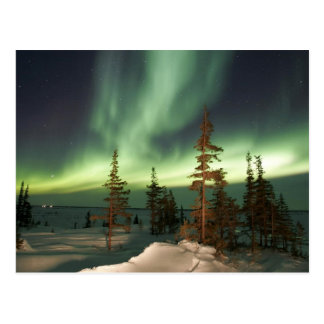 Northern Lights Canada Postcards