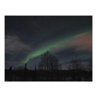 Northern Lights in Boreal Forest Photo Print