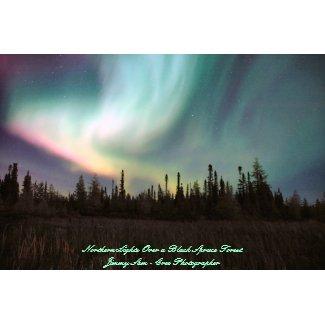 Northern Lights Over a Black Spruce Forest print