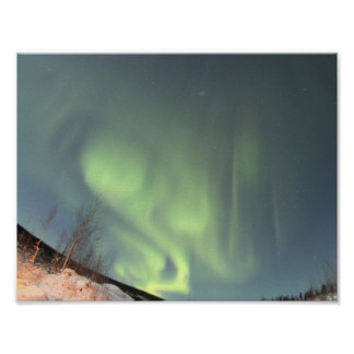 Northern Lights Trees Nature Landscapes Skies Poster