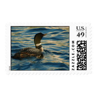 Northern Loon Postage