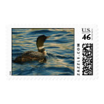 Northern Loon Postage Stamp