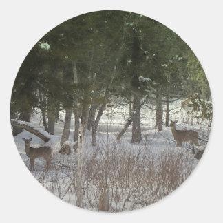 Northern Maine 38 Classic Round Sticker