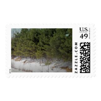 Northern Maine 39 Postage Stamp