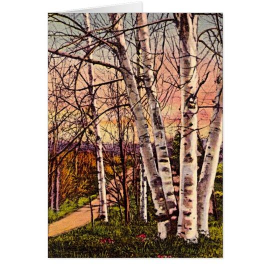 Northern Michigan Birch Trees in Spring Card