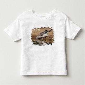Northern Mockingbird drinking at south Texas pon Toddler T-shirt