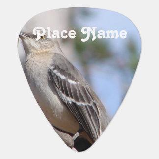 Northern Mockingbird Pick