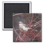 Northern Mockingbird Magnets