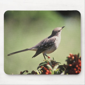 Northern mockingbird mouse pad