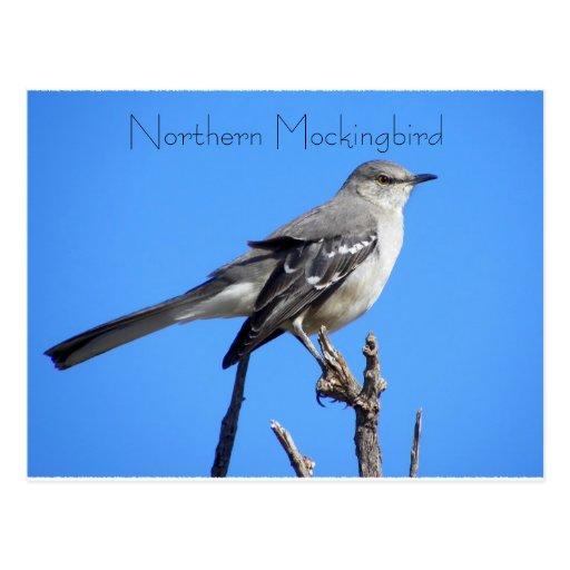 Northern Mockingbird Post Card