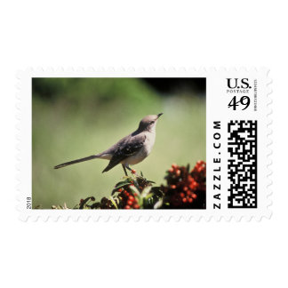 Northern mockingbird postage