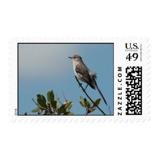 Northern Mockingbird Postage Stamps