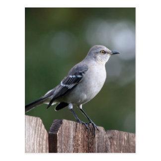 Northern Mockingbird Post Cards
