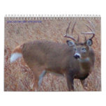 Northern North Dakota Deer Pictures Calendars