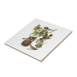 Northern Oriole by Audubon Tile