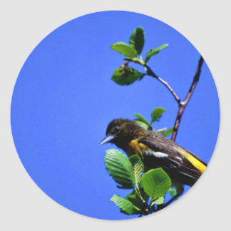 Northern Oriole Stickers