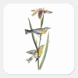 Northern Parula by Audubon Square Sticker