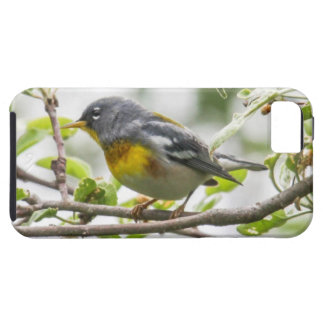 Northern Parula iPhone 5 Covers