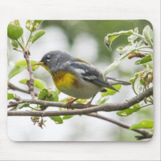 Northern Parula Mouse Pad
