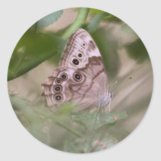 Northern Pearly Eye Stickers
