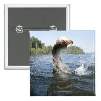 Northern Pike jumping out of water in a lake. Button