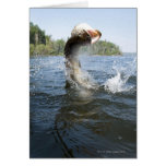 Northern Pike jumping out of water in a lake. Card