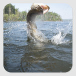 Northern Pike jumping out of water in a lake. Square Sticker