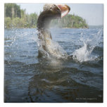 Northern Pike jumping out of water in a lake. Large Square Tile