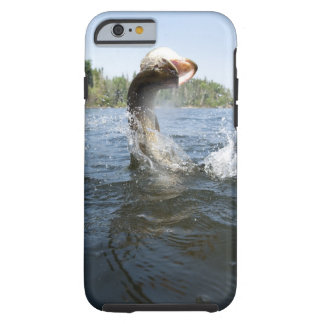 Northern Pike jumping out of water in a lake. Tough iPhone 6 Case