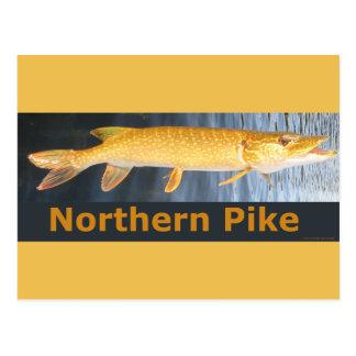Northern Pike Postcar Postcard