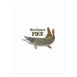 Northern Pike Postcard