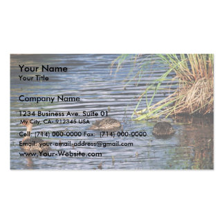Northern Pintail Brood Business Card
