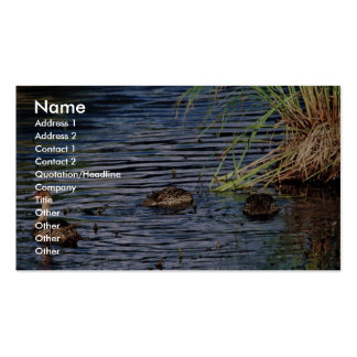 Northern Pintail Brood Business Cards