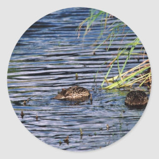 Northern Pintail Brood Sticker