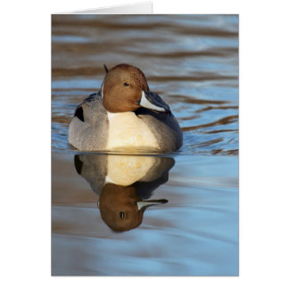 Northern Pintail Card