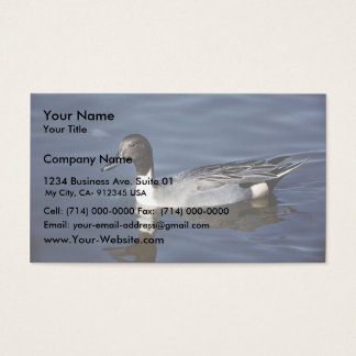Northern Pintail Duck Male Business Card