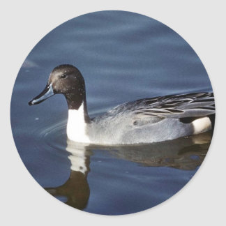 Northern Pintail Duck Male Sticker