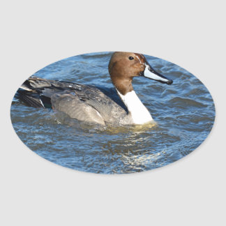 Northern Pintail Duck Oval Sticker