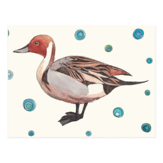 Northern Pintail duck watercolor postcard
